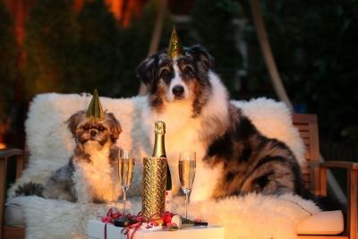 10 tips voor huisdieren tijdens de jaarwisseling