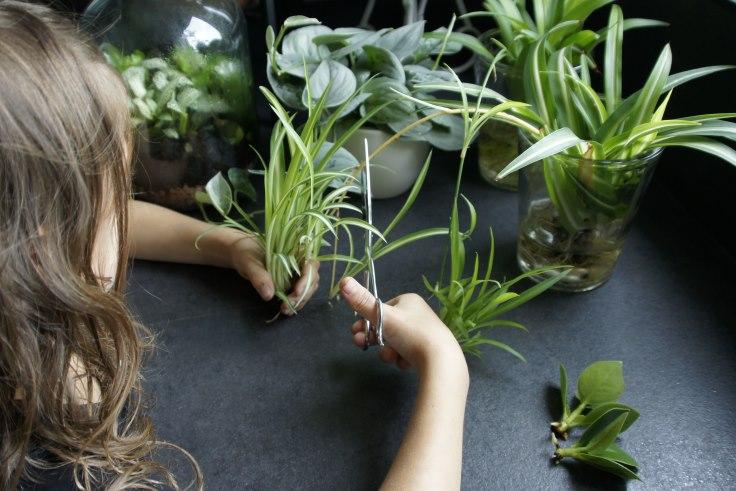 Kamer-Planten-Event op zondag 3 september