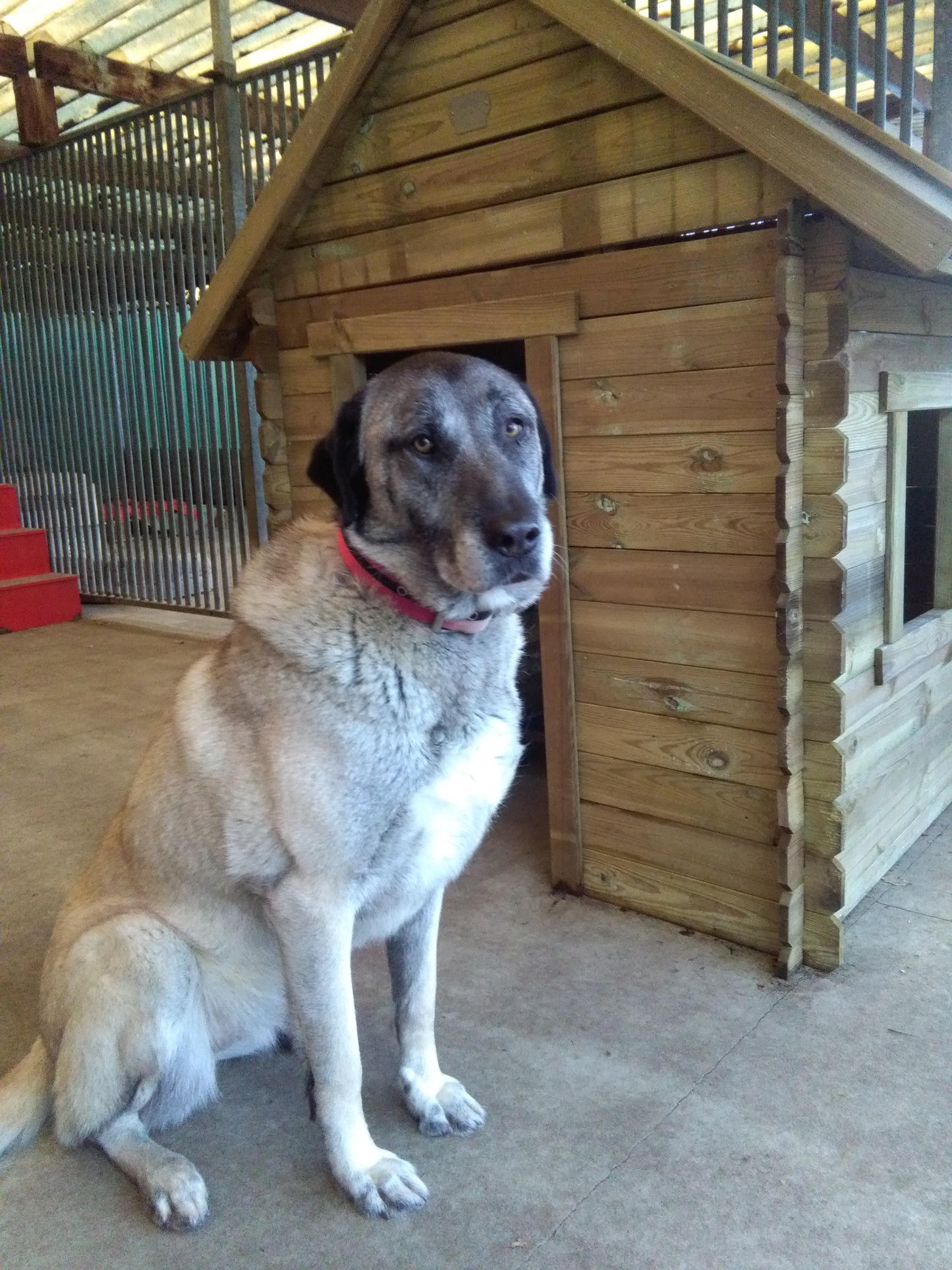 Wawollie sponsort speelhuisje voor de honden